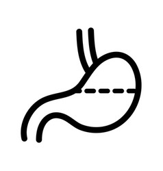 stomach outline icon vector image