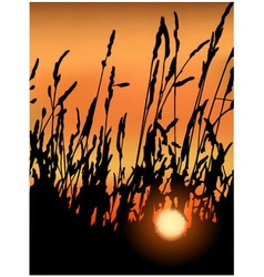 Sunset in grass vector