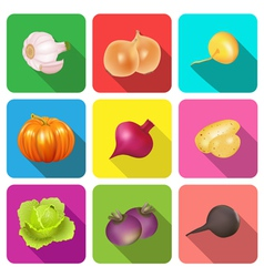 set of icons on a theme vegetables vector image