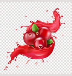 Cranberry realistic in red juice splash vector