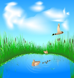 lake and ducks vector image