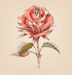 pink rose hand drawn in retro style vector image