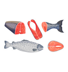 Raw salmon fish slabs with red flesh isolated on vector