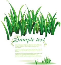 Template with green grass vector