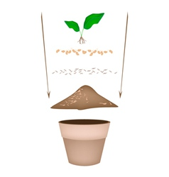 Terracotta Flower Pots with Soil and Young Plant vector