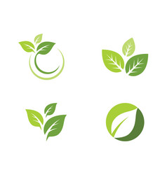 Tree leaf icon template vector