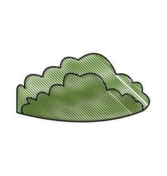drawing green bush foliage natural vector image