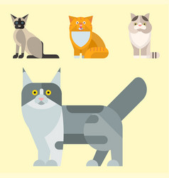 cats cute animal funny vector image