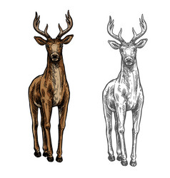 Elk hind sketch wild animal isolated icon vector