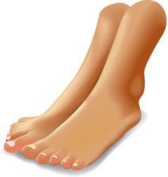 female feet isolated on vector image
