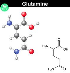 Glutamine proteinogenic amino acid vector
