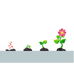 infographic planting tree steps seedling vector image