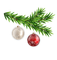 spruce branch fir with christmas ball vector image