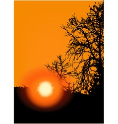 Sunset in trees vector image