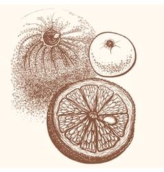 Hand drawn orange citrus in vector image