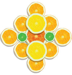 lemon orange lime grapefruit slices on white vector image