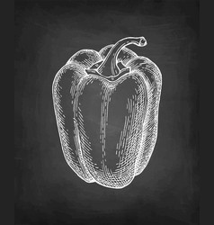 chalk sketch of bell pepper vector image