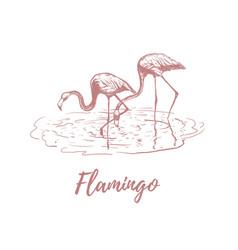 flamingo on water flamingo sketch vector image