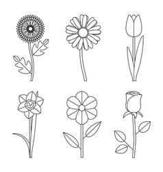 Flowers line drawings vector