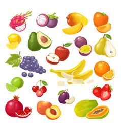 Set tropical fruits color flat vector