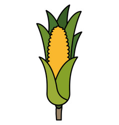 sweet corn isolated icon vector image