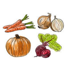 types of fresh vegetables vector image