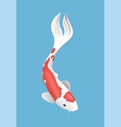 chinese japanese koi fish red carp vector image