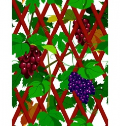 Seamless grapevine vector