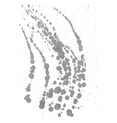 gray paint ink splash isolated on white vector image