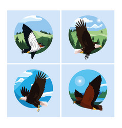 Hawks and eagles birds in landscape vector