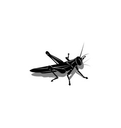 isolated silhouette a grasshopper with a vector image