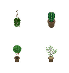 Isometric houseplant set of peyote tree fern and vector