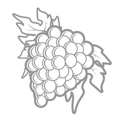 outline of bunch of grapes in simple style vector image