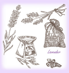 Plant lavender in sketch style vector