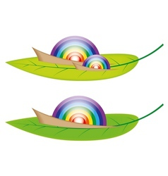 Snail Rainbow vector