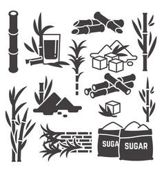 Sugar cane sugarcane plant harvest vector