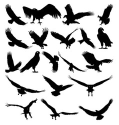 Birds of prey vector