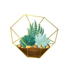 Fresh botanical succulent plant in home terrarium vector
