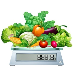 Fresh vegetables on the scales vector