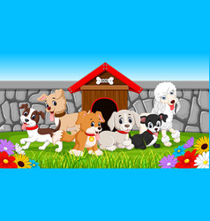 many pet dogs in the park vector image