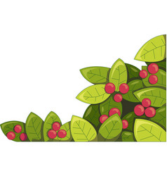 plant with berries vector image vector image
