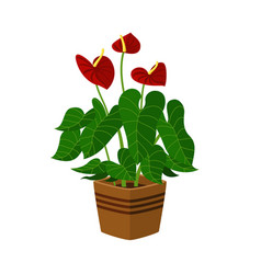 Anthurium houseplant in flower pot icon on vector