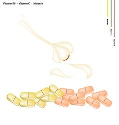 Garlic Bulbs with Vitamin B6 C and Minerals vector