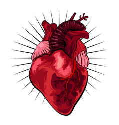 Human heart in tattoo style vector