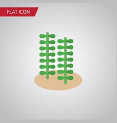 isolated alga flat icon seaweed element vector image