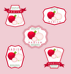 The theme radish vector