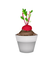 Radish or beet in ceramic flower pots vector