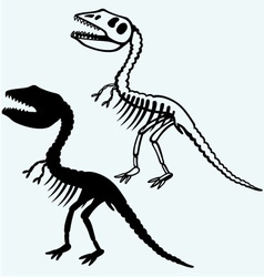 Tyrannosaurus skeleton vector image