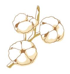 cotton soft flowers icon floral natural decor vector image