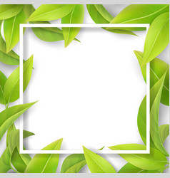 Green mellow leaves and white frame vector